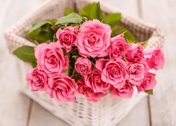 Mother's Day Flowers and Their Meanings